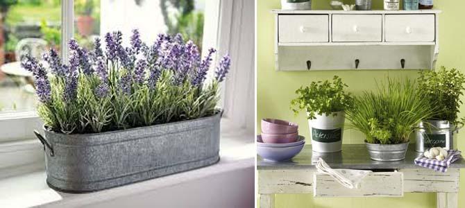 растения и цветы в интерьере кухни