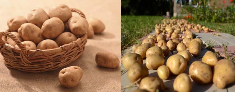 Как сделать закром для картошки 868